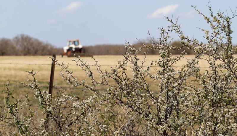 March 31 2014 Back Pasture walk-0917