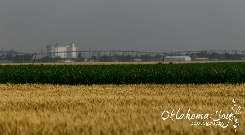 Grainfield Kansas-5765