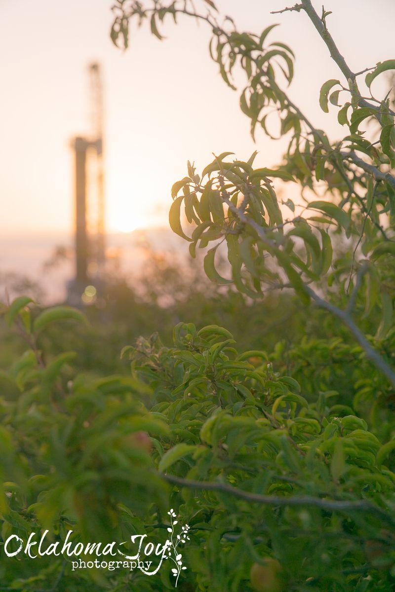 20140704-IMG_7157Joy FranklinRig sunset and plum bush_