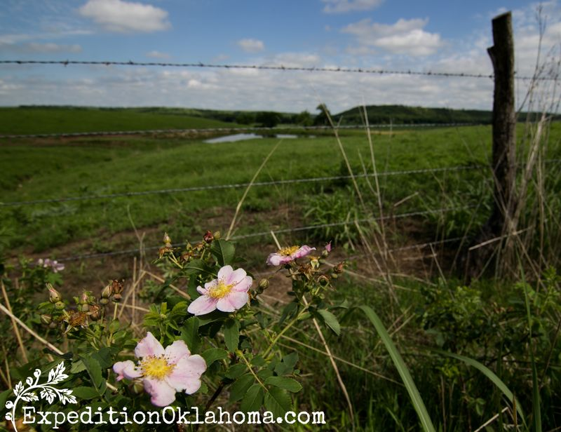 6-2-2014 Flint Hills and Abilene Kansas  WM-2072