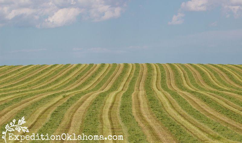 Nebraska in the Summer-9242