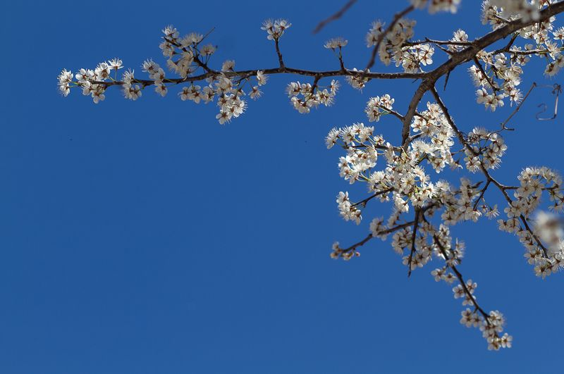 March 31 Spring Blossoms-0868