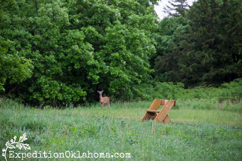 Deer at Blood Run- at Good Earth State Park in Sioux Falls South Dakota-9101