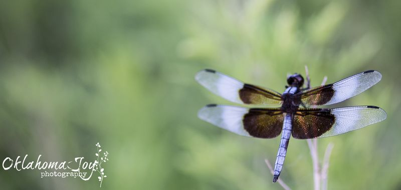 20140806-IMG_1693Dragon Fly_
