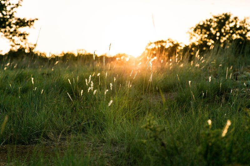 20140819-IMG_3836sunset on the farm