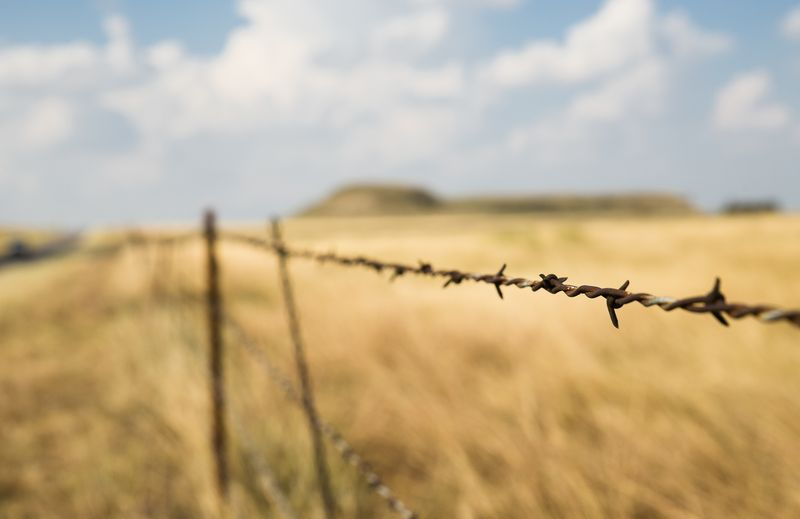 20140826-IMG_4991Barbed wire