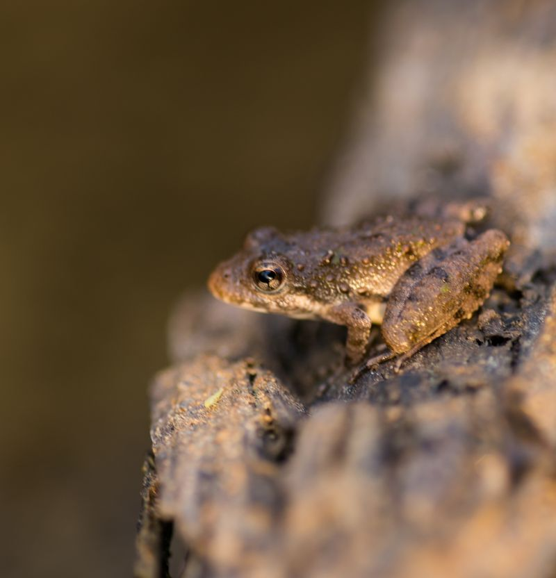 20140819-IMG_3783Little Froggy