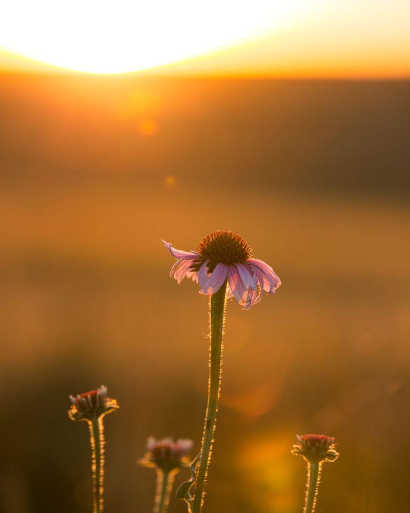 20140619-IMG_4431flowers 8x10