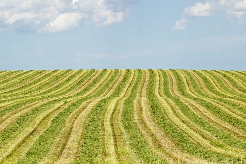 20140605-IMG_9242Nebraska Fields - Land in Nebraska-2