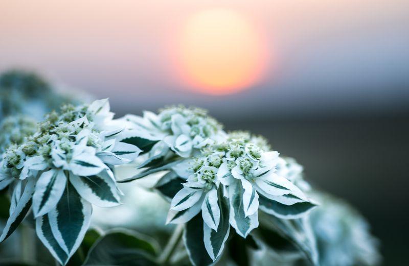 20140826-IMG_5146macro sunset_