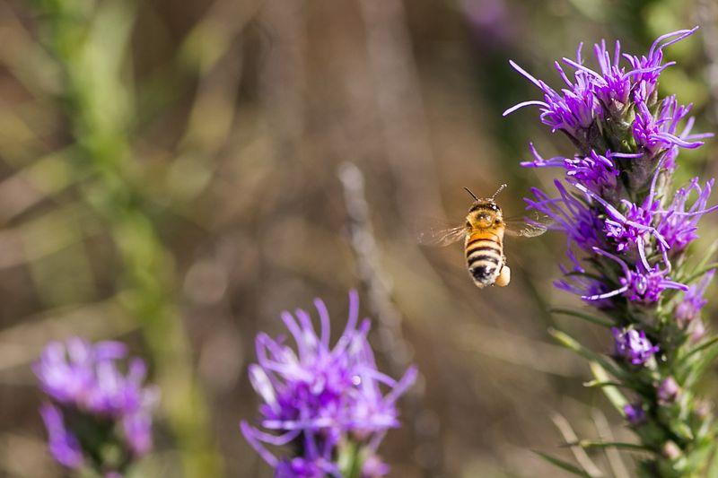 20140829-IMG_5558Busy Little Bee WM