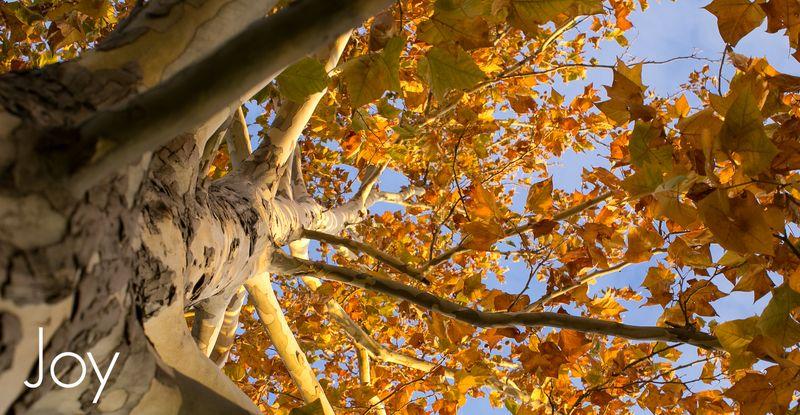 November Leaves -1026