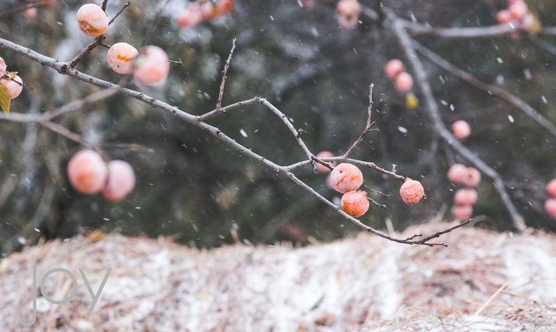 Snow-1568