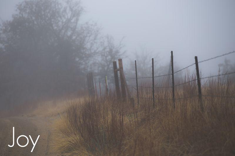 Fog-4368