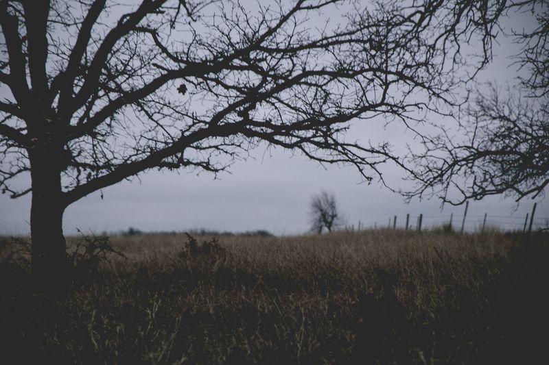 Dark December Walk -1