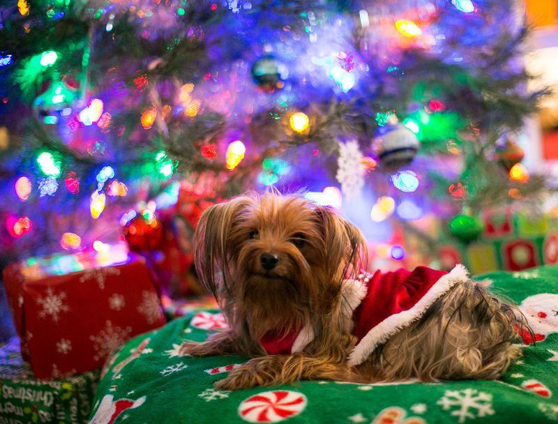 Christmas Eve 2014 -Moki -1-2