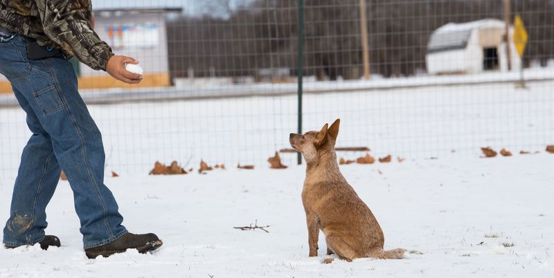 Dogs playing in the snow-1-9