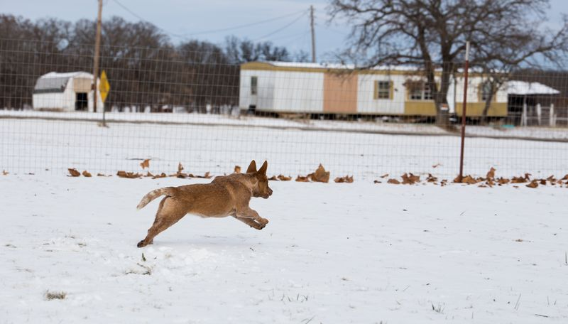 Dogs playing in the snow-1-12