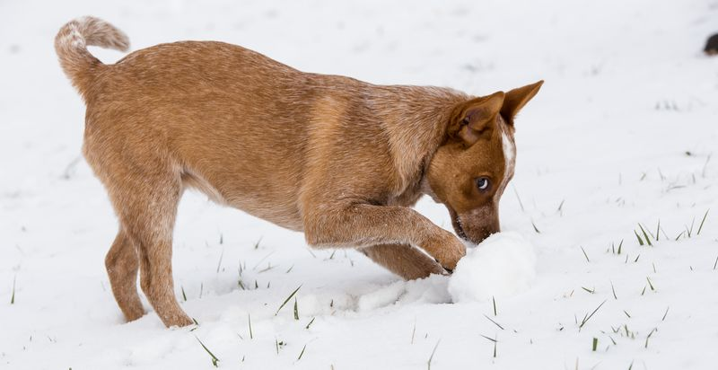 Dogs playing in the snow-1-5