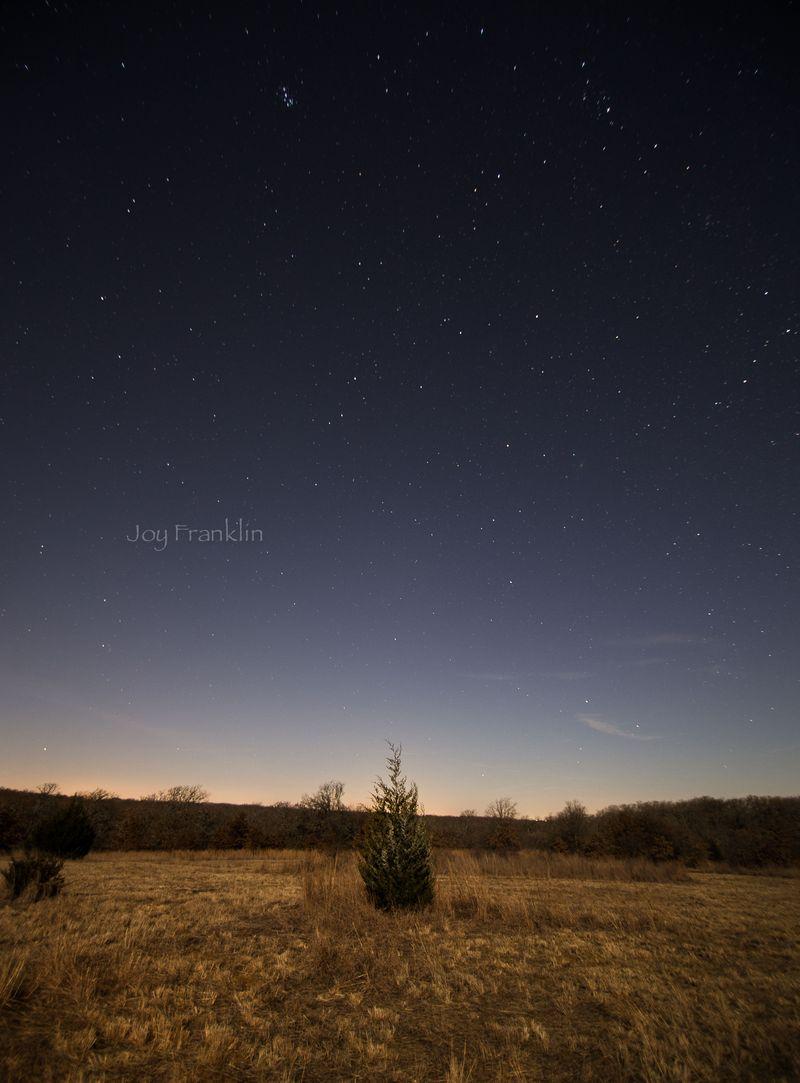 Shooting Stars -back pasture-1-3