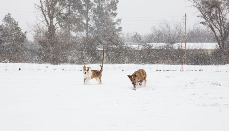 February 27 snow-5958