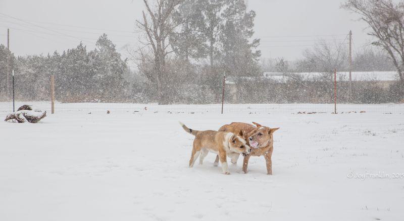 February 27 snow-5969