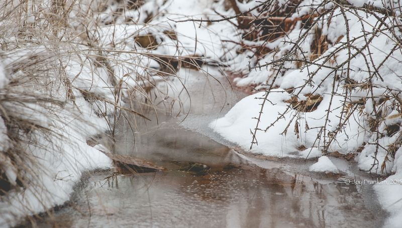 February 28 2015 Snow by Joy Franklin-6141