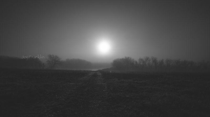Foggy March Morning-7273