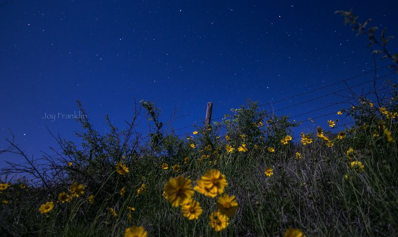Stars and wildflowers -3329