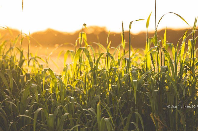 Steve Cutting Hay on the Farm -1-3