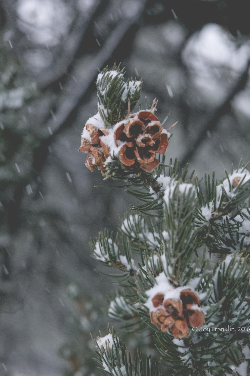 November Snow in Pine Hill New Mexico-1-2
