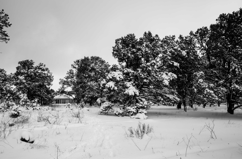 Snow in PineHill NM January 21 2017-1-2