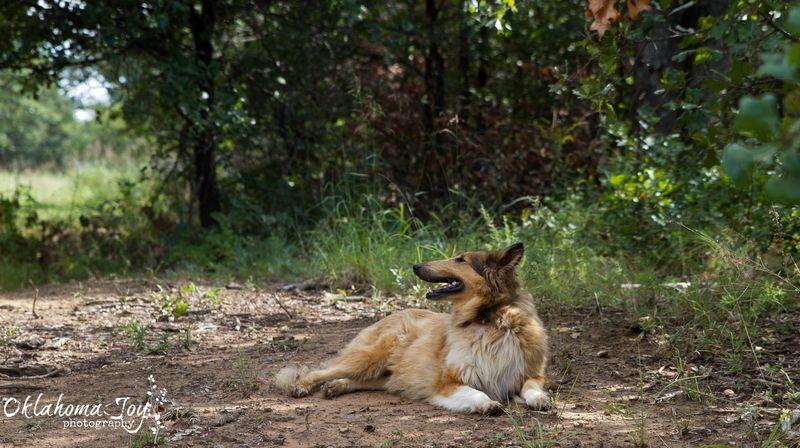20140829-IMG_7295Sassy Lassie WM