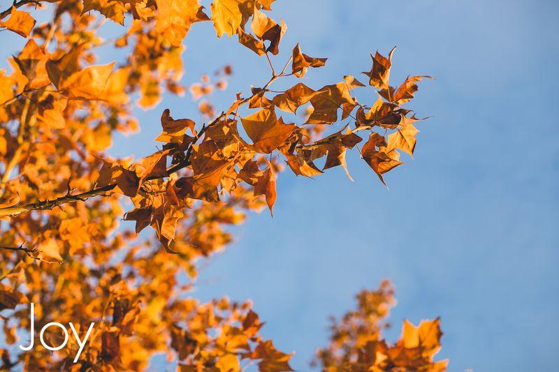 November Leaves -1031
