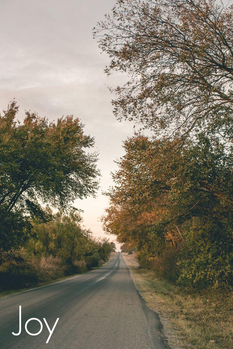 November Leaves -1053