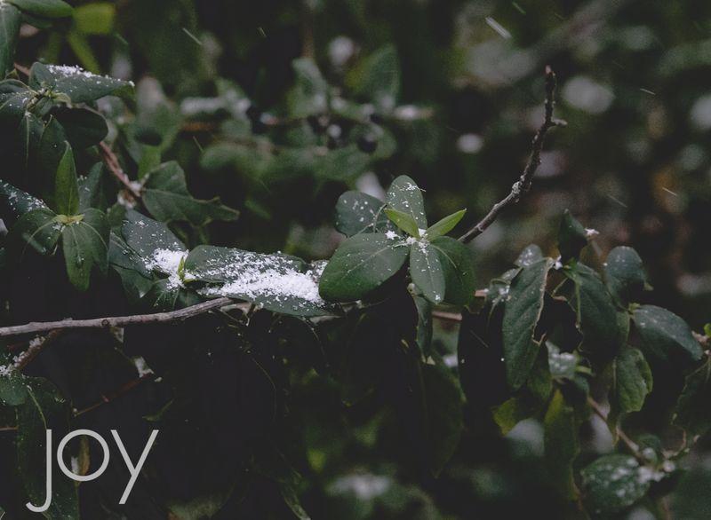 Snow-1575