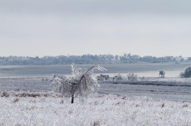 Ice Storm in Rush Springs OK 12-2013 matte-7907