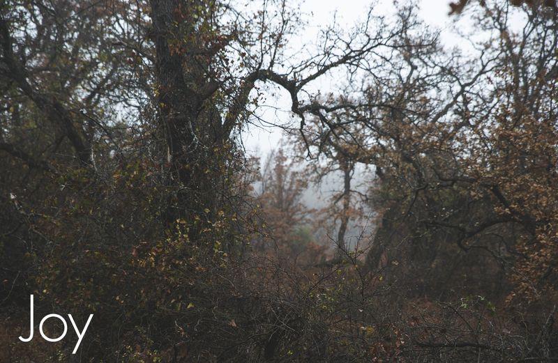 Fog-4269
