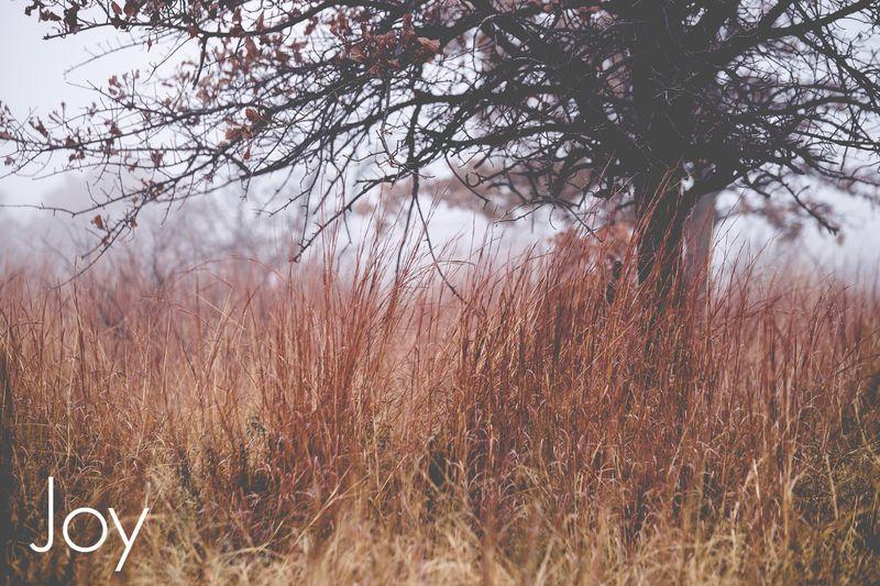 Fog-4385
