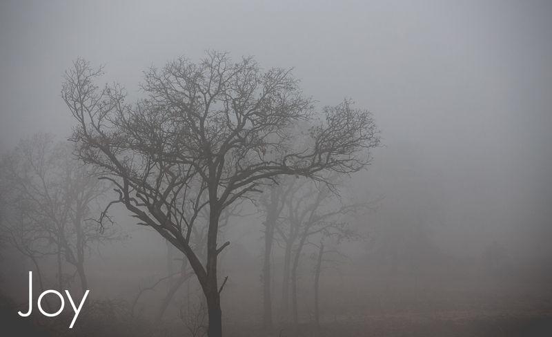 Fog-4404