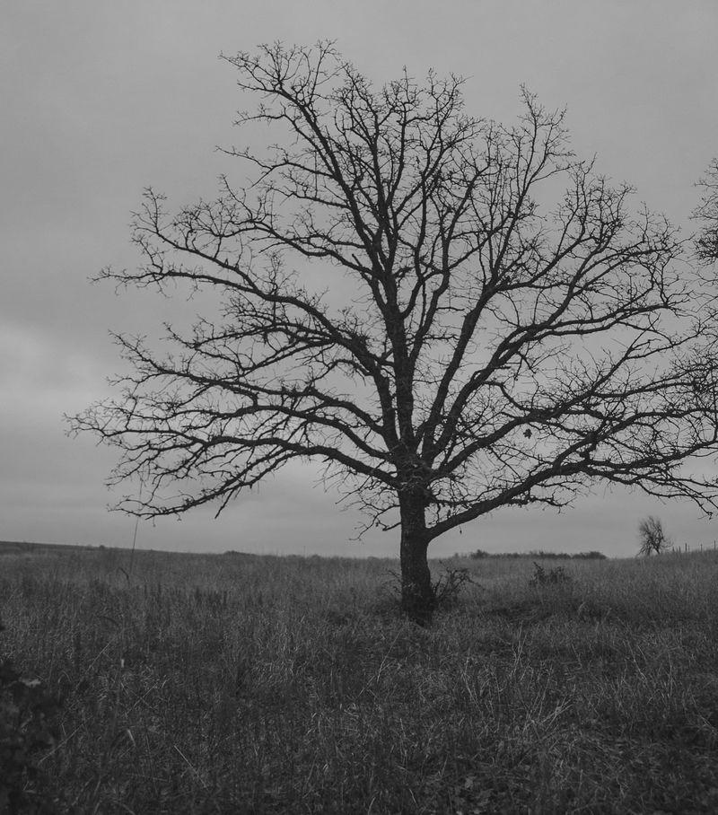 Dark December Walk -1-8