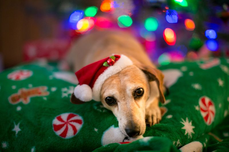 Christmas Eve 2014 -Dogs-1