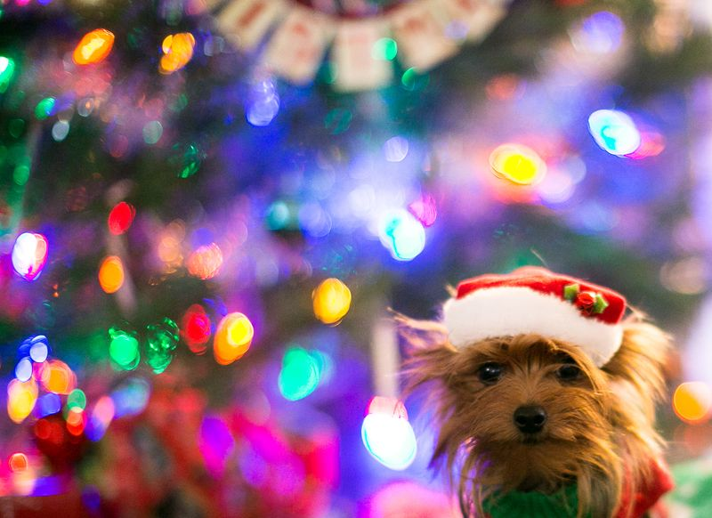 Christmas Eve 2014 -Dogs-1-2