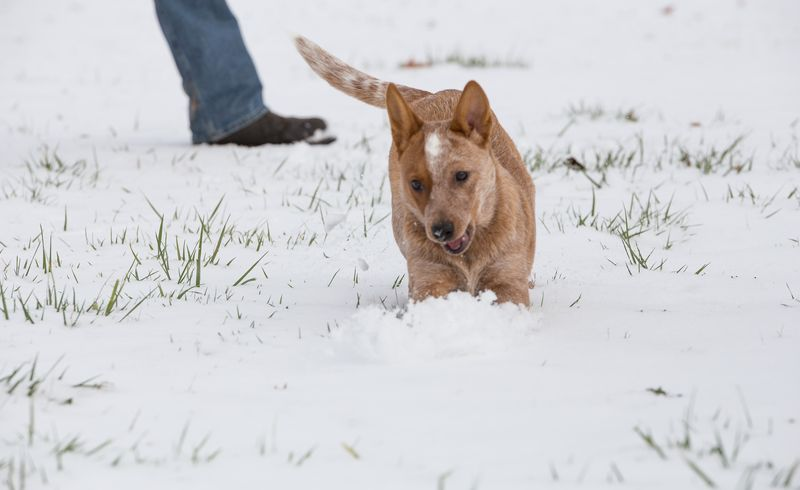 Dogs playing in the snow-1-7