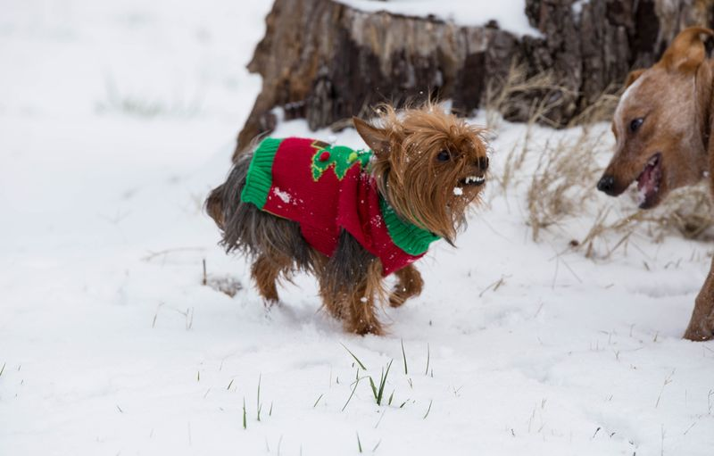 Dogs playing in the snow-1-3