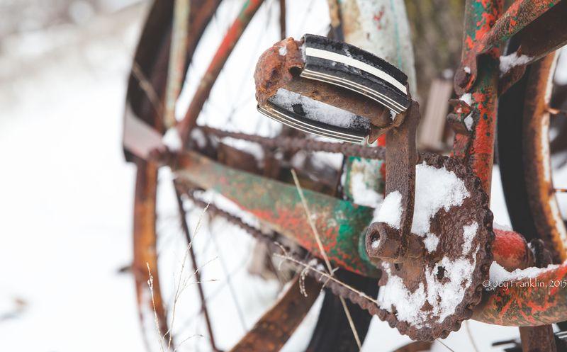 February 28 2015 Snow by Joy Franklin-6064