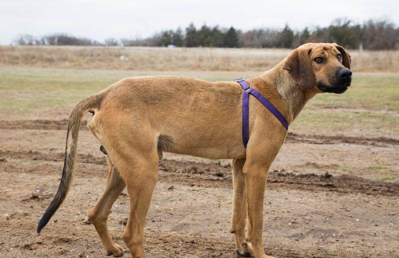 Morrison the Dumped Dog-7149