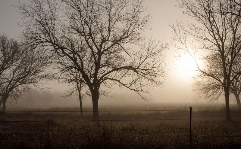 Foggy March Morning-7234