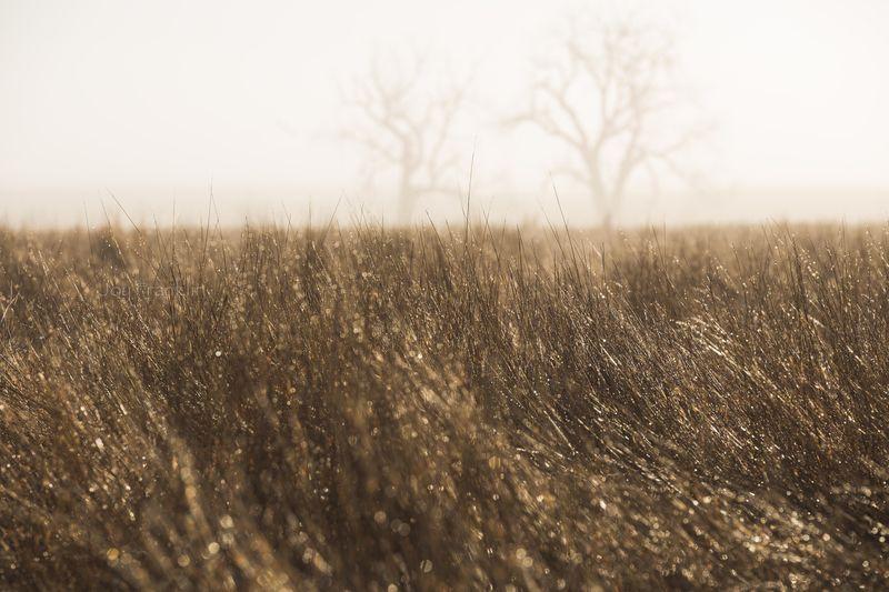 Foggy March Morning-7305