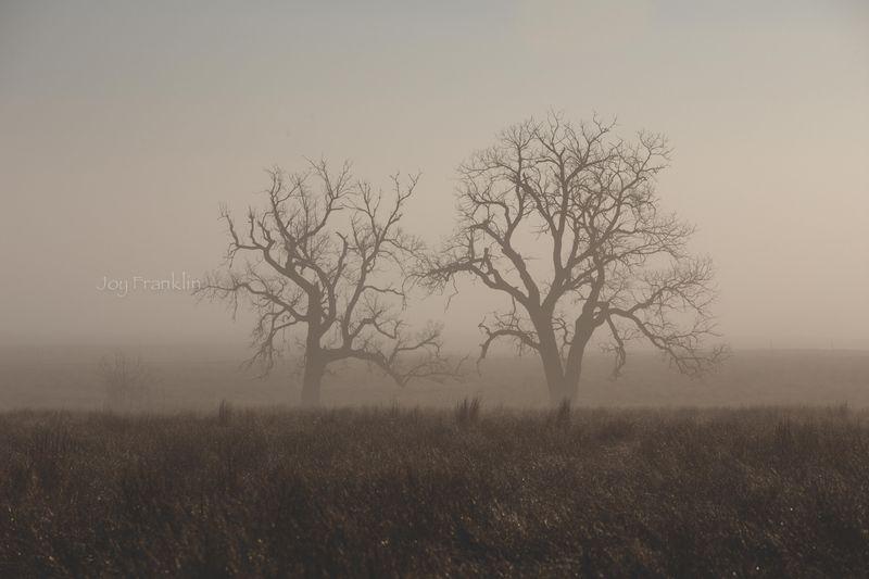 Foggy March Morning-7317